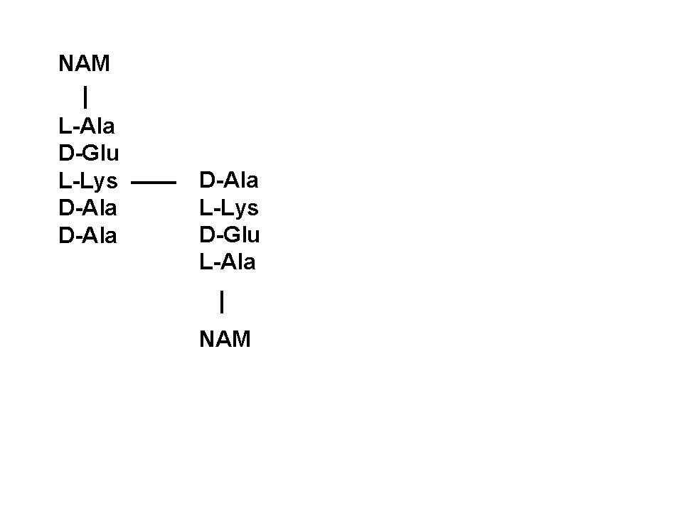 tabelle  vergleich verschiedener mikroorganismen